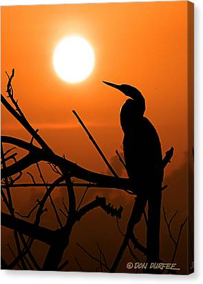 Canvas Print featuring the photograph Sunrise Anhinga by Don Durfee