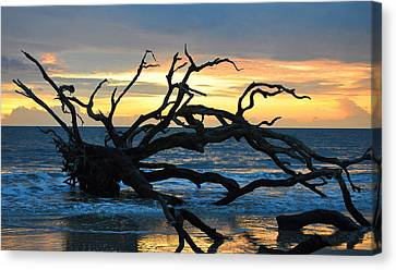 Sunrise At Driftwood Beach 1.1 Canvas Print by Bruce Gourley