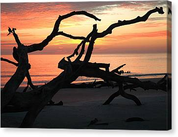 Sunrise At Driftwood Beach 3.1 Canvas Print by Bruce Gourley
