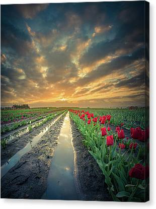 Canvas Print featuring the photograph Sunrise At Tulip Filed After A Storm by William Lee