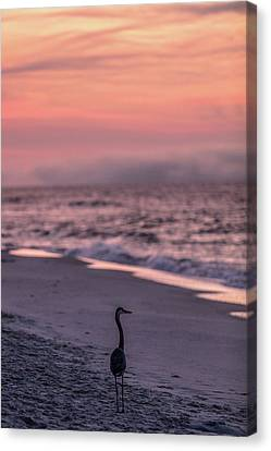 Canvas Print featuring the photograph Sunrise Beach And Bird by John McGraw