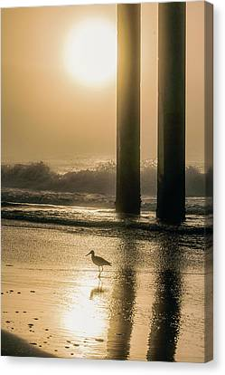 Canvas Print featuring the photograph Sunrise Bird At Beach  by John McGraw
