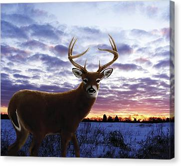 Sunrise Buck Canvas Print by Barbara Hymer