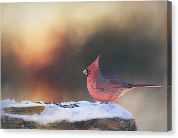 Sunrise Cardinal Canvas Print by Barbara Hymer