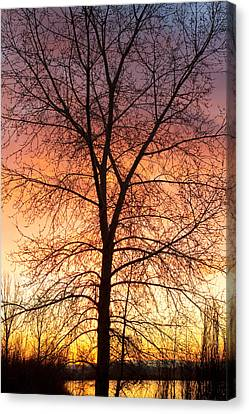 Sunrise December 16th 2010 Canvas Print by James BO  Insogna