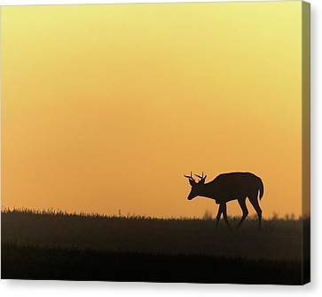 Sunrise Deer Canvas Print by Bill Wakeley
