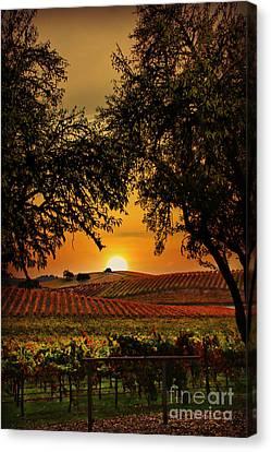 Grape Leaf Canvas Print - Sunrise Fall Vineyard by Stephanie Laird
