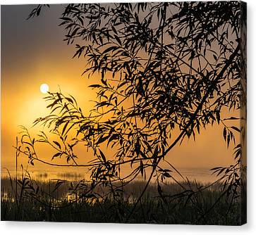 Sunrise Fog Canvas Print
