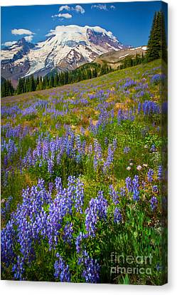 Sunrise Meadow Canvas Print by Inge Johnsson