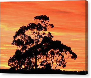 Canvas Print featuring the photograph Sunrise Mystery by Mark Blauhoefer