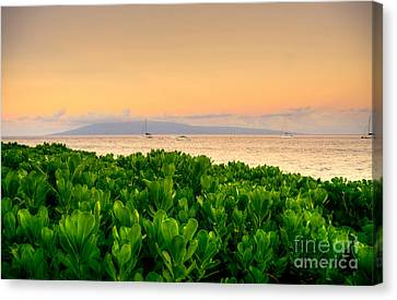 Canvas Print featuring the photograph Sunrise On Maui by Kelly Wade