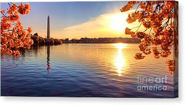 Sunrise On The Tidal Basin Canvas Print by Olivier Le Queinec