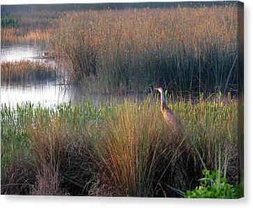 Sunrise On The Wetlands Canvas Print