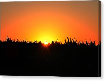 Sunrise Over Corn Field Canvas Print by Bill Cannon