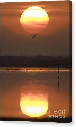 Sunrise Reflection Canvas Print by Hitendra SINKAR