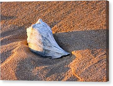 Sunrise Seashell Canvas Print by Allan Levin