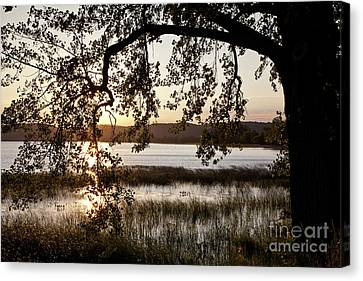 Canvas Print featuring the photograph Sunrise Silhouette by Susan Cole Kelly