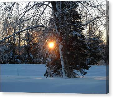 Sunrise Through Branches Canvas Print by Kent Lorentzen