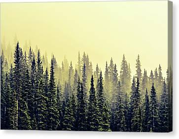 Sunrise Through The Pines Canvas Print