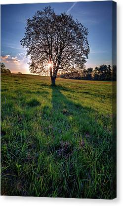 Sunrise Through The Tree Canvas Print by Rick Berk