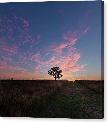 Sunrise Tree 2016 Square Canvas Print