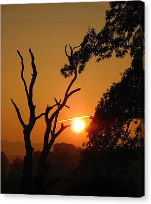 Canvas Print featuring the photograph Sunrise Trees by RKAB Works