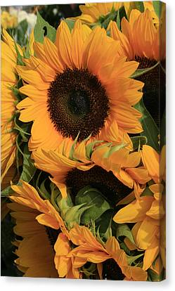 Suns And Brothers Canvas Print by Alan Rutherford