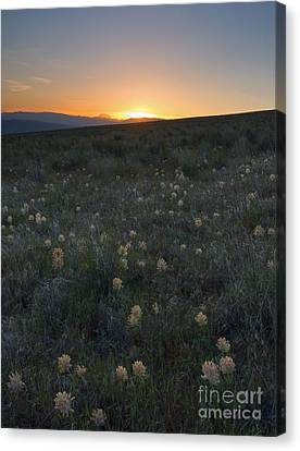 Sunset And Clover Canvas Print by Mike Dawson