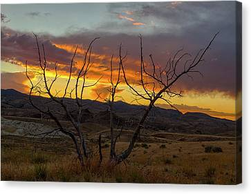 Sunset And Petrified Tree Canvas Print by David Gn