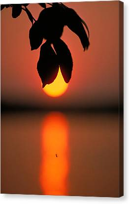 Sunset And Spider Canvas Print by Thomas Firak