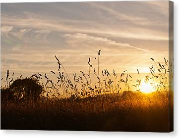 Sunset And Wheat Field Canvas Print
