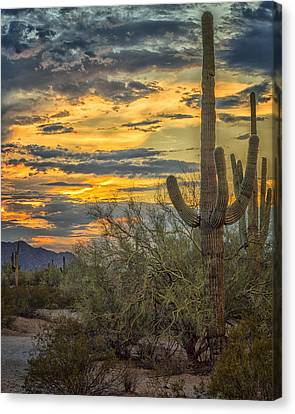 Sunset Approaches - Arizona Sonoran Desert Canvas Print