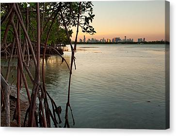 Sunset At Miami Behind Wild Mangrove Forest Canvas Print