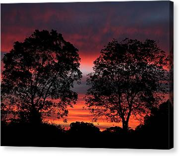 Sunset Behind Two Trees Canvas Print