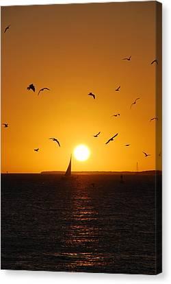 Sunset Birds Key West Canvas Print by Susanne Van Hulst
