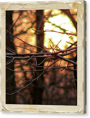 Sun Rays Canvas Print - Sunset Branch Out  by Debra     Vatalaro