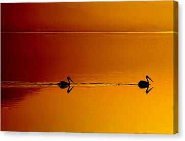 Sea Birds Canvas Print - Sunset Cruising by Laurie Search