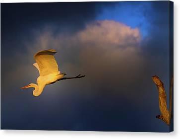 Beauty Mark Canvas Print - Sunset Flight by Mark Andrew Thomas