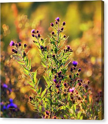Canvas Print featuring the photograph Sunset Flowers by Christina Rollo