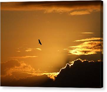 Sunset Glide Canvas Print by Mark Alan Perry