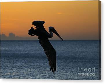 Sunset Glide Canvas Print by Mike Dawson