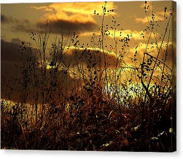 Sunset Grasses Canvas Print by Julie Hamilton