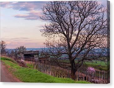 Sunset In Farmland Canvas Print