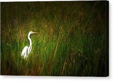 Beauty Mark Canvas Print - Sunset In The Sawgrass by Mark Andrew Thomas