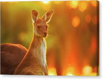 Canvas Print featuring the photograph Sunset Joey, Yanchep National Park by Dave Catley