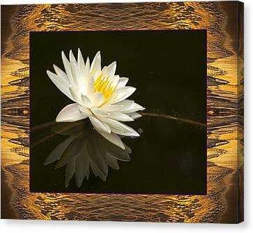 Sunset Lily Canvas Print by Bell And Todd