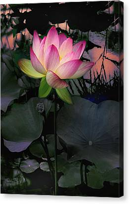Sunset Lotus Canvas Print