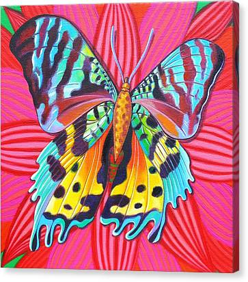 Sunset Moth Canvas Print by Jane Tattersfield