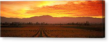 Sunset, Napa Valley, California, Usa Canvas Print by Panoramic Images