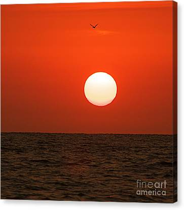 Canvas Print featuring the photograph Sunset by Nicola Fiscarelli